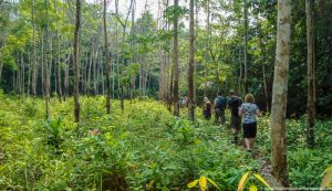 tan-trekking-tour-koh-chang-7