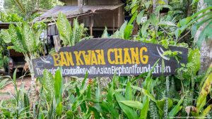 Ban Kwan Chang Elephant Camp (1)