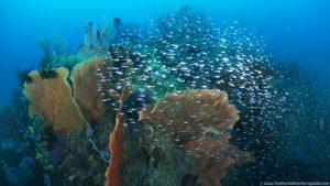 learn-to-dive-at-the-similan-islands (33)