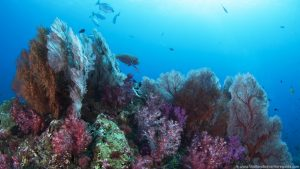 learn-to-dive-at-the-similan-islands (61)